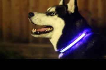 collar-leds-para-perros